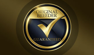 Original Turf Breeder NSW