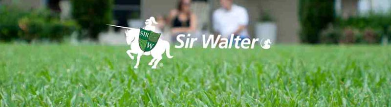 Sir Walter Turf Delivery